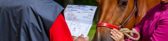 Vérification de l'identité d'un cheval