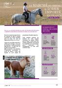 Le marché du cheval de loisir importé en France