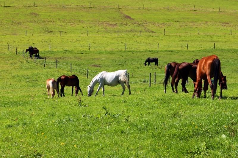 Formation gestion des pâturages pour vos chevaux.