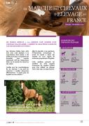 Le marché des chevaux d