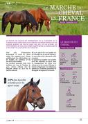 Le marché du cheval en France (2018)