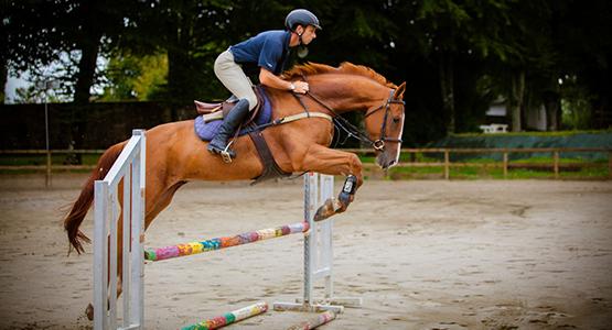 Une séance de gymnastique pour le cheval d'obstacles