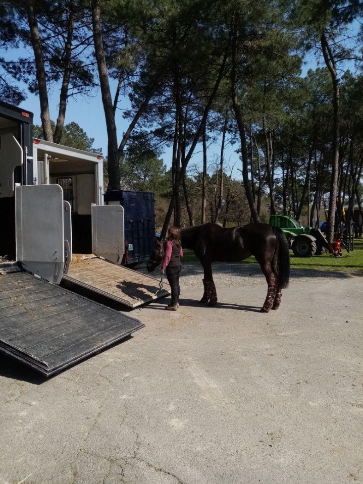 Gestion des chevaux du Cadre noir face aux mesures du gouvernement