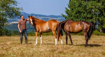 Détenteur cheval au pré